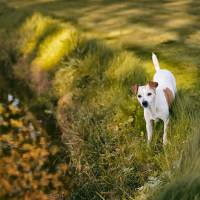 hunde_fotograf_aasmul_taastrup_15